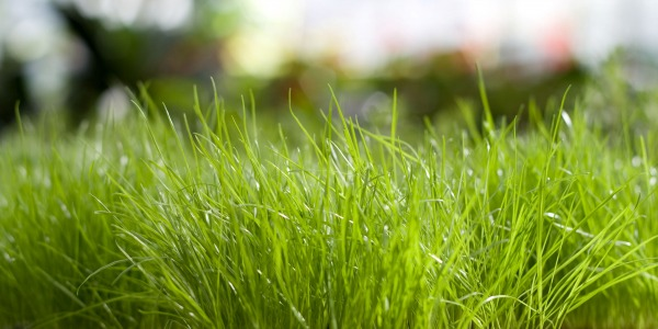 Tips for re-turfing your lawn